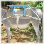 Le plus beau pour nos ânes